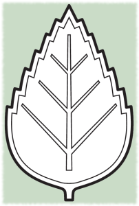 brezovy_listek_zeleny